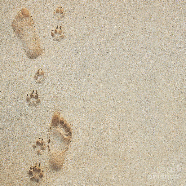 Adorable Poster featuring the photograph Paw And Footprints 2 by Brandon Tabiolo - Printscapes