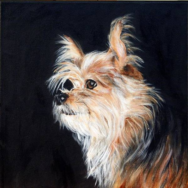 Dog Poster featuring the painting Pepi The Chorkie by BJ Redmond