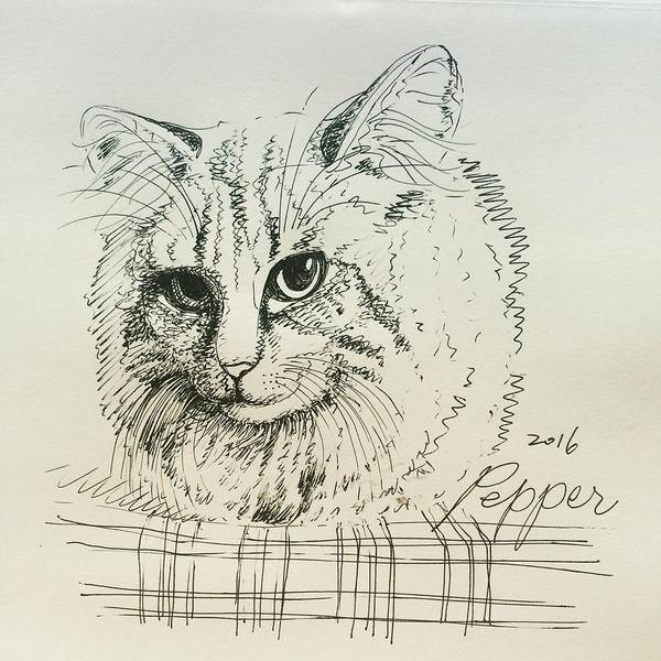 Cat Poster featuring the drawing Pepper by Pookie Pet Portraits