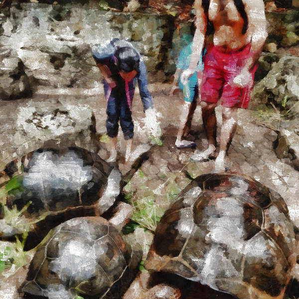 Tortoise Poster featuring the photograph Playing With Giant Tortoises by Ashish Agarwal