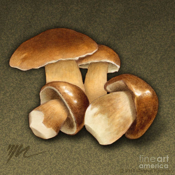 Porcini Poster featuring the painting Porcini Mushrooms by Marshall Robinson