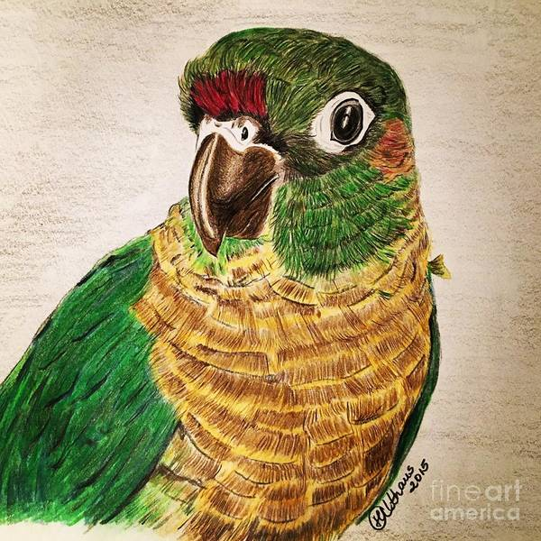 Bird Poster featuring the drawing Green Cheeked Conure by Heike Althaus