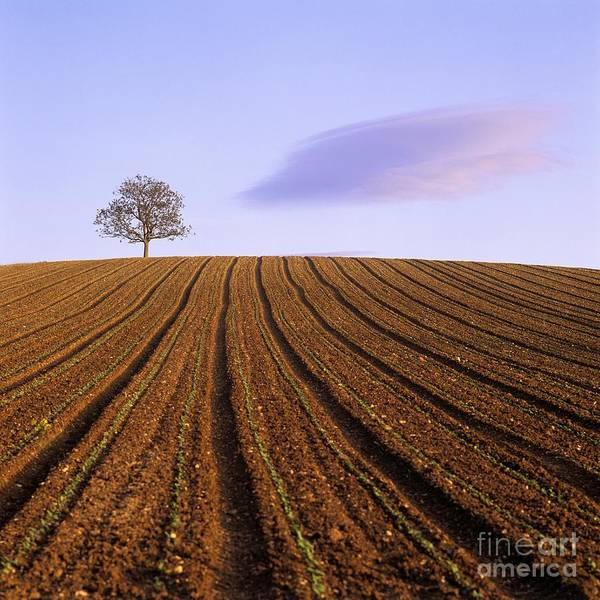 Agriculture Poster featuring the photograph Remote Tree In A Ploughed Field by Bernard Jaubert