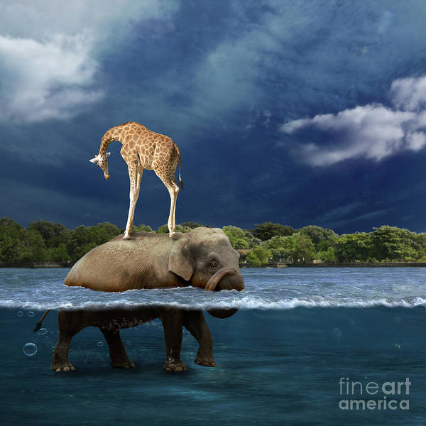 Girafe Poster featuring the photograph Safe by Martine Roch