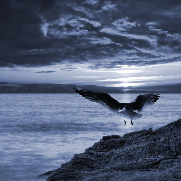 Atmospheric Poster featuring the photograph Seagull by Jaroslaw Grudzinski