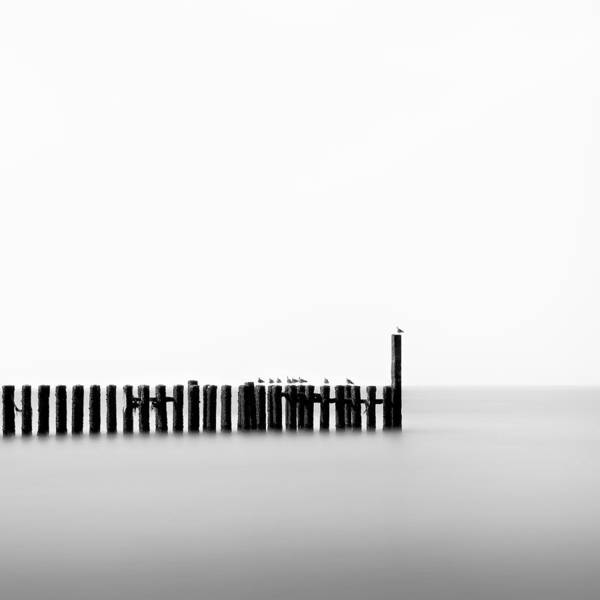 Groynes Poster featuring the photograph Seagulls And Groynes by Dave Bowman