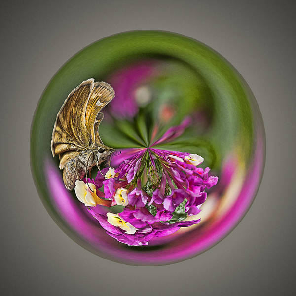 Butterfly Poster featuring the photograph Skipper Orb by Sharon Moore