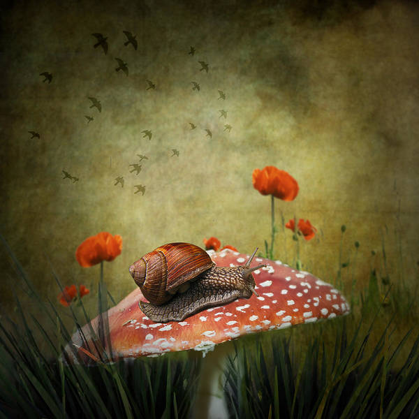 Fine Art Poster featuring the photograph Snail Pace by Ian Barber