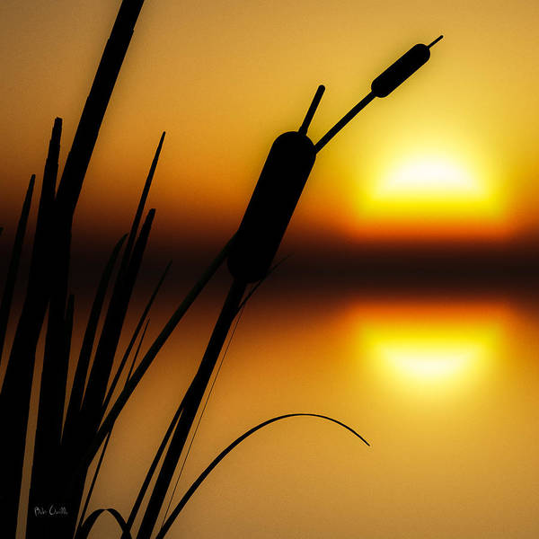 Tranquil Poster featuring the photograph Summertime Whispers by Bob Orsillo