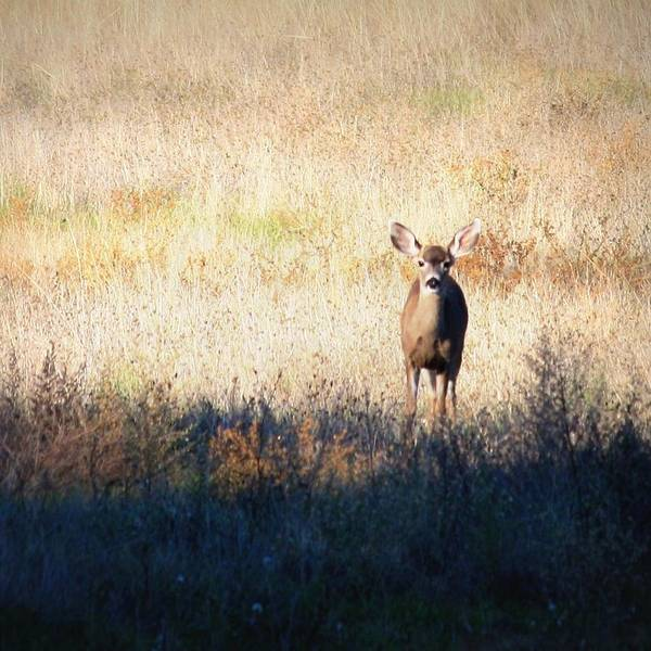 Deer Art Poster featuring the photograph Sycamore Grove Series 2 by Carol Groenen