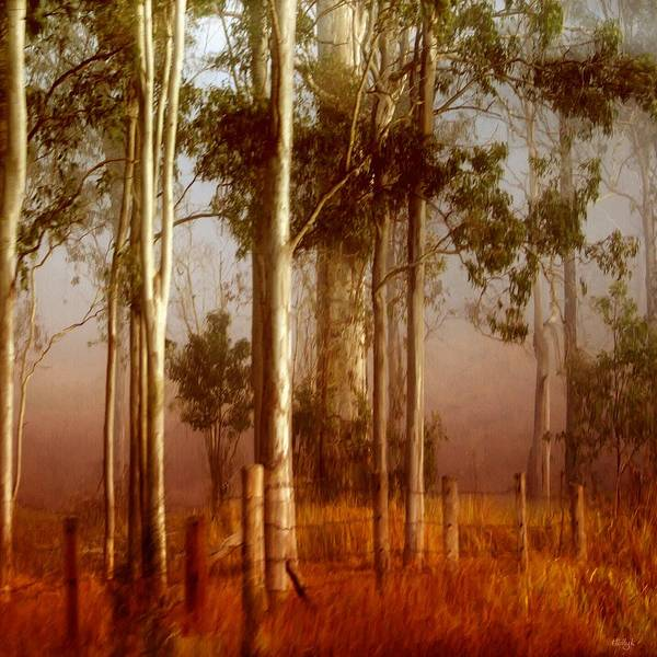 Landscape Poster featuring the photograph Tall Timbers by Holly Kempe