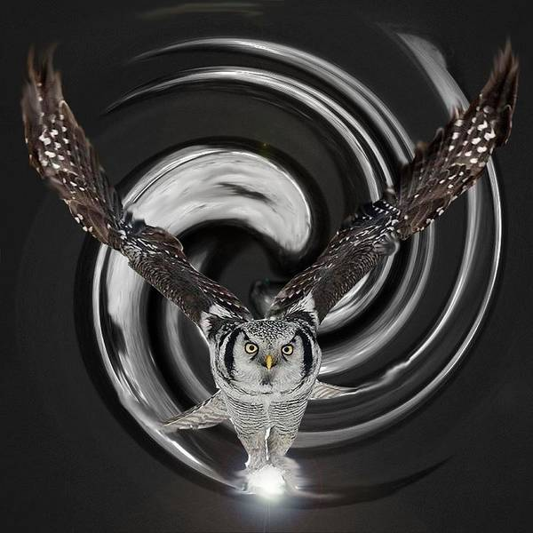 Owl Poster featuring the digital art The Eyes Of Nature Are Watching You by Bianca Van Heumen