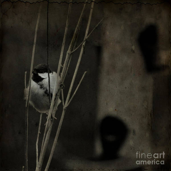 Tit Poster featuring the photograph The Great Tit by Angel Ciesniarska