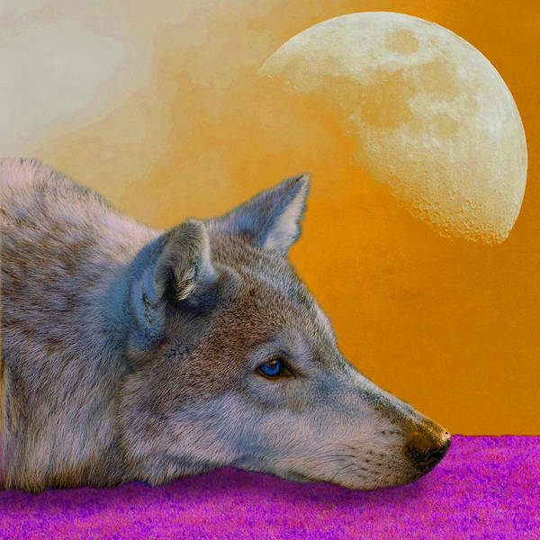 Animal; Moon; Outdoors; Predator; Sky; Timber Wolf; Wild; Wild Animal; Wildlife; Wolf; Animal; Moon Poster featuring the photograph Timber Wolf Under The Moon by Tina B Hamilton