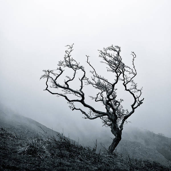 Tree Poster featuring the photograph Twisted by Dave Bowman