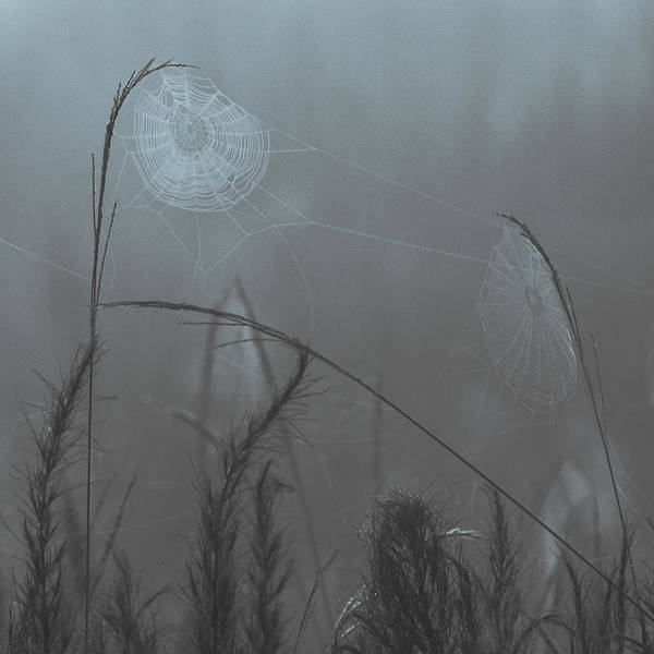 Spider Webs Poster featuring the photograph Webs In The Mist by Thomas Miller