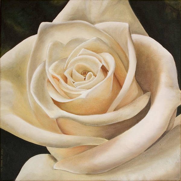Flower Poster featuring the painting White Rose by Rob De Vries