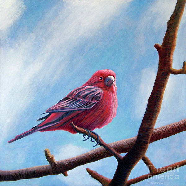 Bird Poster featuring the painting Winter Finch by Brian Commerford