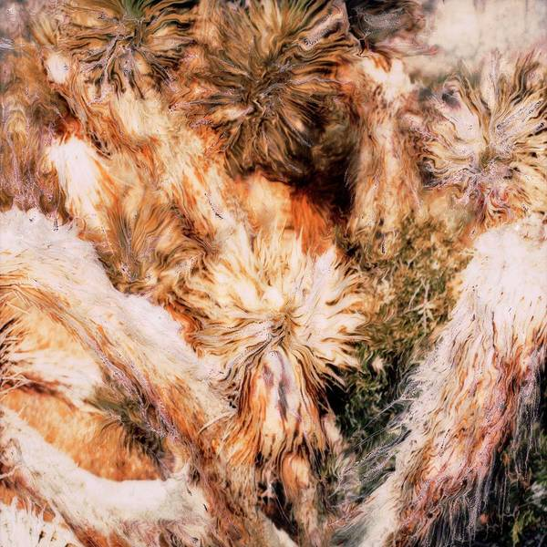 Paul Tokarski Poster featuring the photograph Yucca Warm Patch by Paul Tokarski