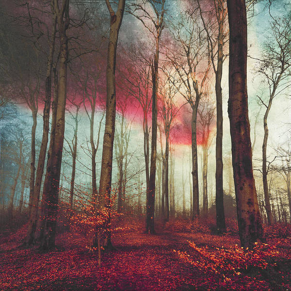 Forest Poster featuring the photograph Ruby Red Evening by Dirk Wuestenhagen