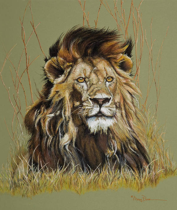 Mary Dove Art Poster featuring the painting Old Warrior African Lion by Mary Dove