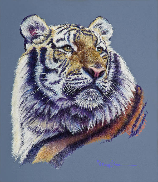 Mary Dove Art Poster featuring the pastel Pretty Boy Siberian Tiger by Mary Dove