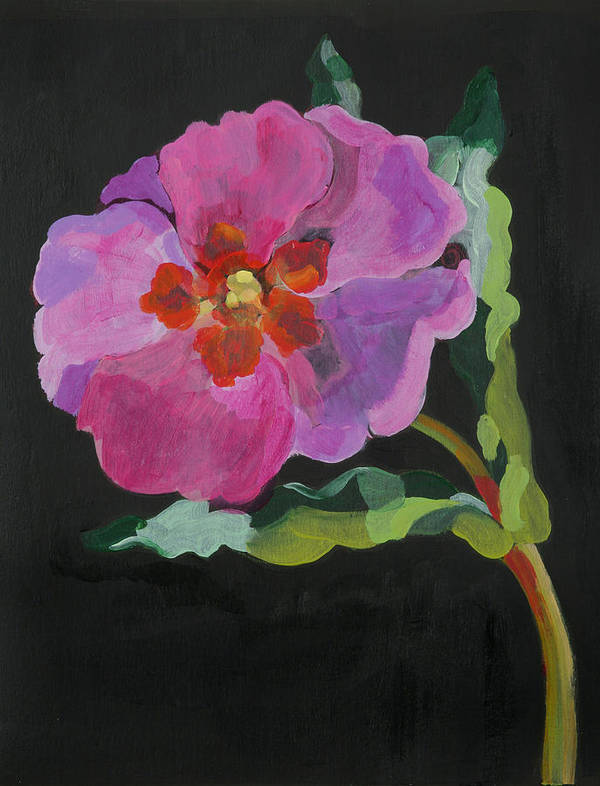 Flower; Pink; Flowers; Stem; Pink; Purple Poster featuring the painting Cistus New Zealand by Deborah Barton