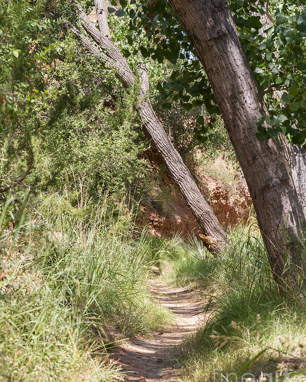 Palo Duro Canyon Poster featuring the photograph 08.03.14 Palo Duro Canyon Rojo Grande Trail 8e by Ashley M Conger