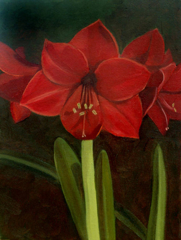 Amaryllis Poster featuring the painting Amaryllis by Nancy Griswold