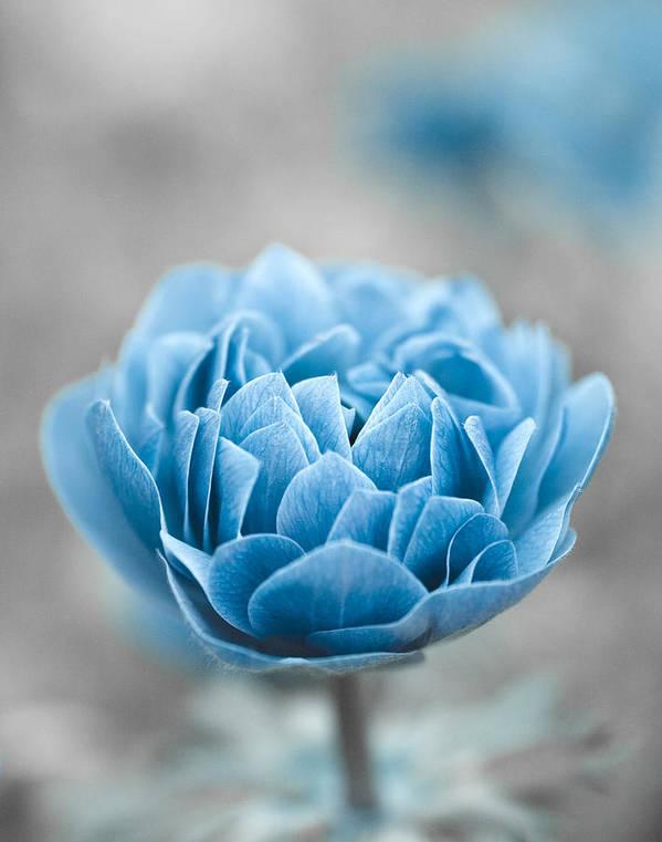 Blue Poster featuring the photograph Blue Flower by Frank Tschakert