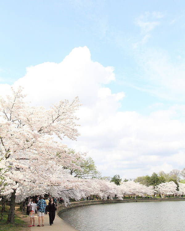 America Poster featuring the photograph Cherry Blossoms - Washington Dc - 01131 by DC Photographer