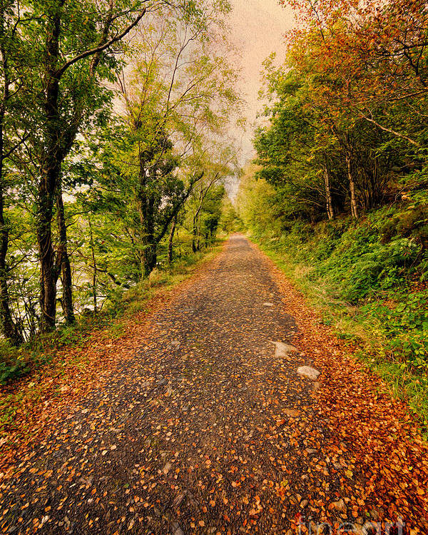 Hdr Poster featuring the photograph Country Lane by Adrian Evans