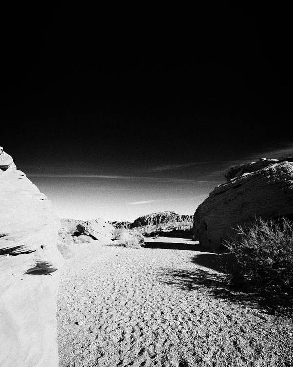 Valley Poster featuring the photograph Dry River Bed Between Beehives Sandstone Formations In Valley Of Fire State Park Nevada Usa by Joe Fox