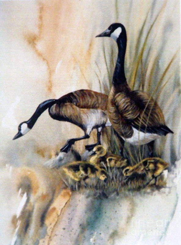 Canadian Geese With Their Young Poster featuring the painting Family Affair by Lynne Parker