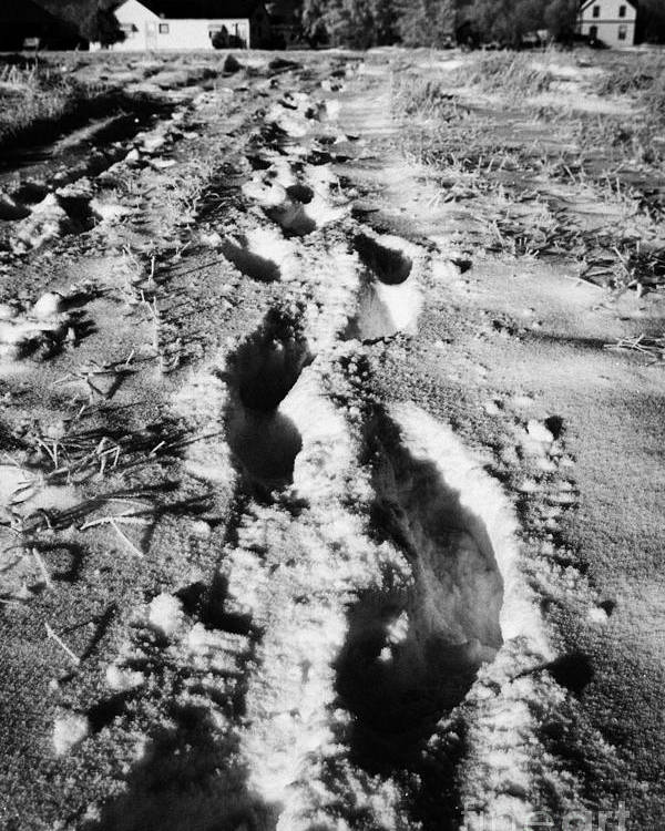 Fresh Poster featuring the photograph fresh footprints crossing deep snow in field towards small rural village of Forget Saskatchewan Cana by Joe Fox