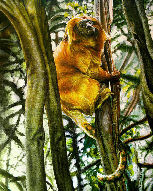 Tamarin Poster featuring the painting Gold Mane by Cara Bevan