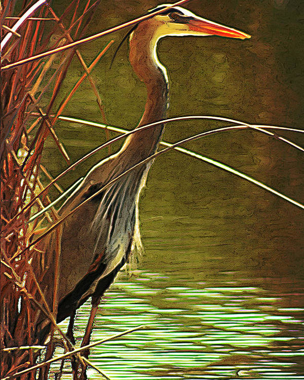 Bird Poster featuring the photograph Heron by Jim Painter
