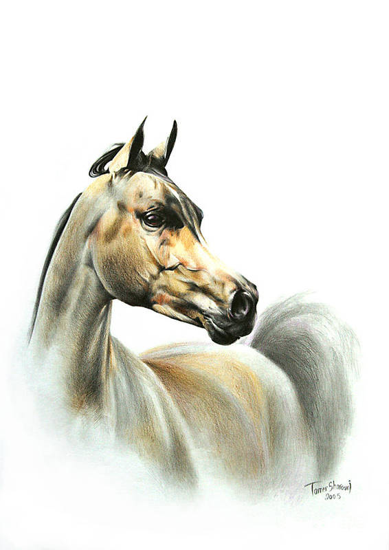 Horse Artwork Poster featuring the drawing Horse Portrait by Tamer and Cindy Elsharouni