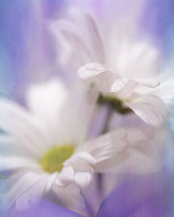 Flowers Poster featuring the photograph Iris Daisy by Janice Sullivan