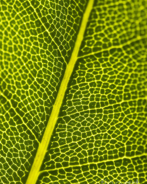 Close Poster featuring the photograph Leafy Details by Jorgo Photography - Wall Art Gallery