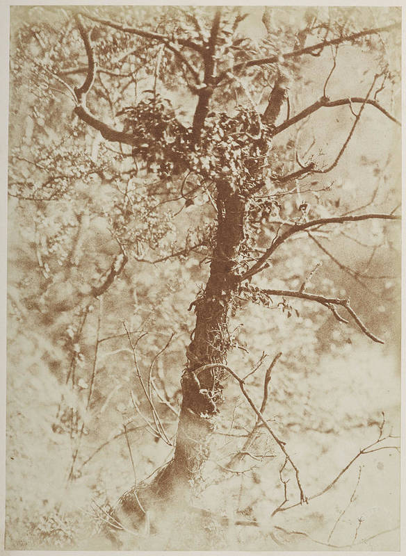 Tree Poster featuring the photograph Photograph Of A Tree by British Library