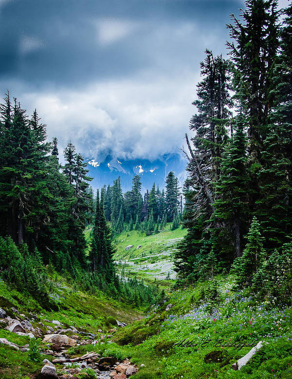 Mt. Rainer Poster featuring the photograph Rainer Glacial Meadow by Allen Biedrzycki