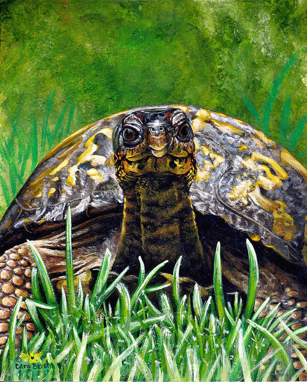 Turtle Poster featuring the painting Smile by Cara Bevan