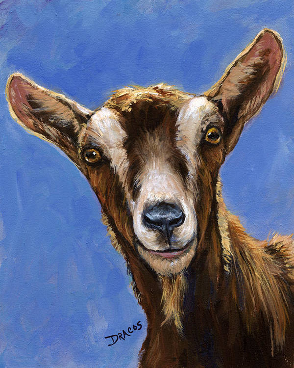 Toggenburg Goat Poster featuring the painting Toggenburg Goat On Blue by Dottie Dracos
