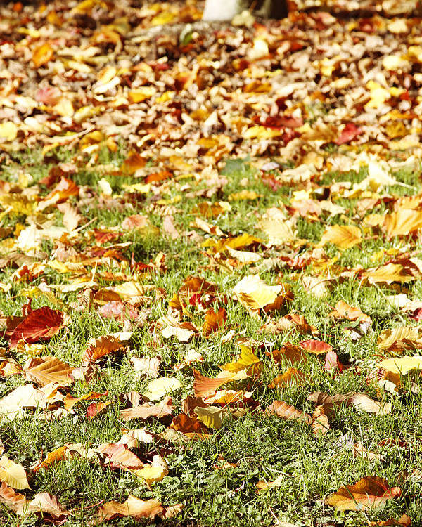 Autumn Poster featuring the photograph Autumn by Les Cunliffe