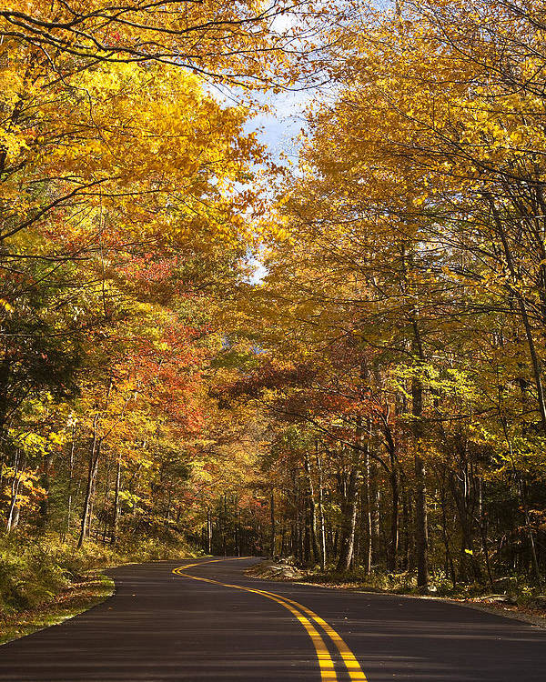 Road Poster featuring the photograph Autumn Drive by Andrew Soundarajan
