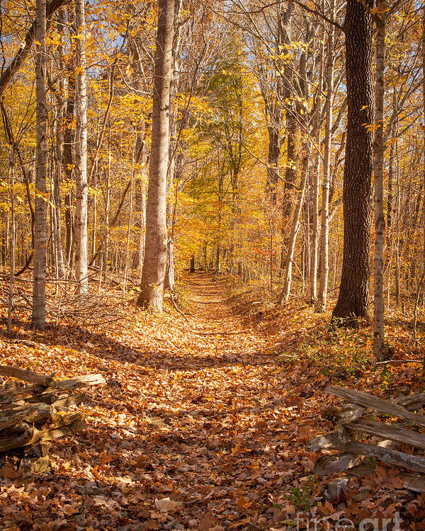 America Poster featuring the photograph Autumn Trail by Brian Jannsen