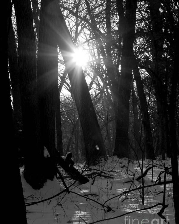Sun Poster featuring the photograph Awakening by Rick Rauzi