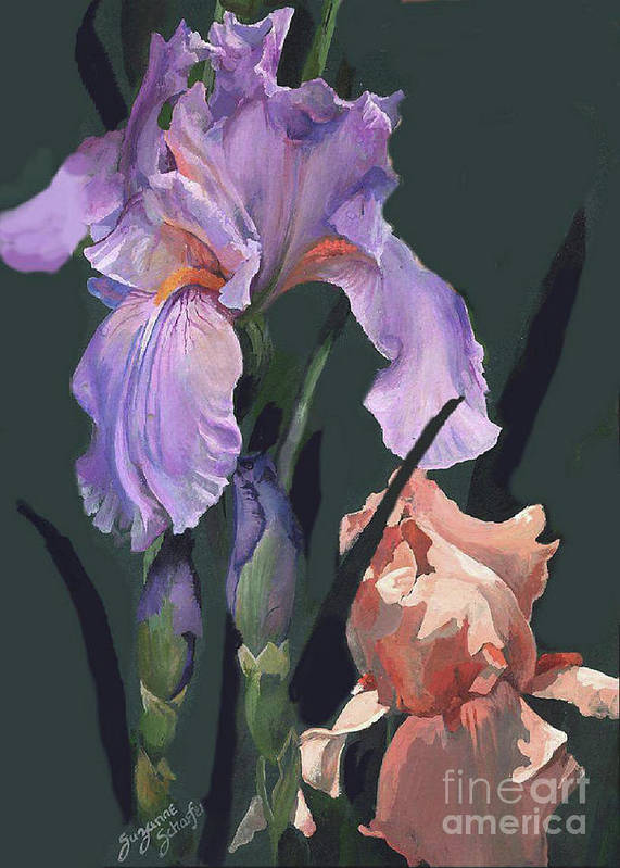 Flowers Poster featuring the painting Iris Study by Suzanne Schaefer