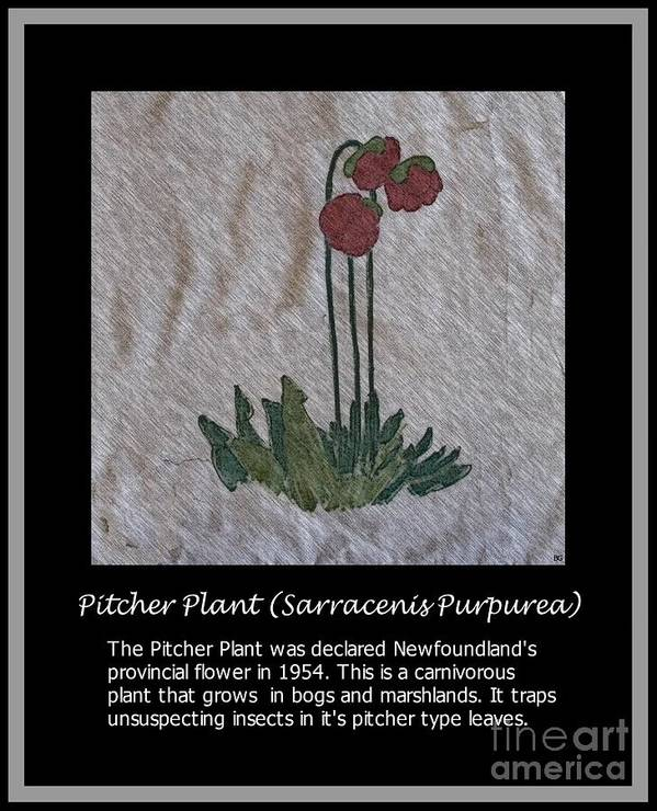 Pitcher Plant Poster featuring the photograph Pitcher Plant by Barbara Griffin